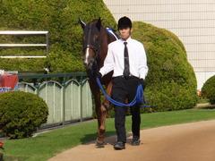 20151024 京都1R 2歳未勝利 サクレメジャー 03