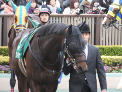 20170205 東京11R 東京新聞杯(G3) プロディガルサン 09