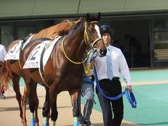 20141026 東京4R ラッシュアタック 02