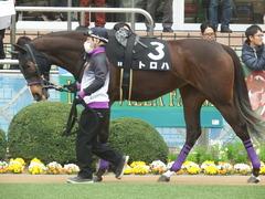20190323 中山9R ミモザ賞 3歳牝馬(500) トロハ 08