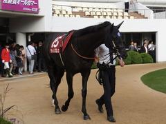 20150927 中山11R オールカマー サトノノブレス 09