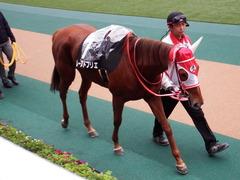 20171118 東京10R ユートピアS(牝1600) レーヌドブリエ 04