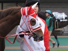 20151123 東京10R 鷹巣山特別 レーヌドブリエ 03