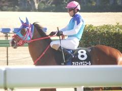 20190127 東京9R セントポーリア賞(500) アドマイヤスコール 19