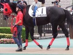 20181008 東京12R (500) ノーザンクリス 08
