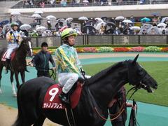 20151108 東京11R AR共和国杯 サトノノブレス 09