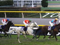 20151129 東京11R ジャパンカップ(G1) 13