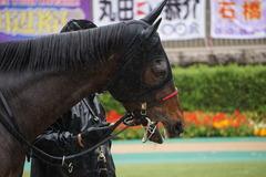 20191123 東京3R 2歳未勝利 ミスミルドレッド 04
