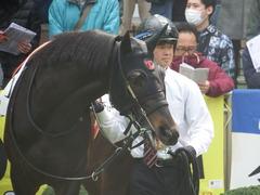 20190331 中山3R 3歳未勝利 ショウナンサジン 13