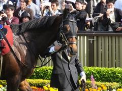 20160430 東京11R 青葉賞(G2) プロディガルサン 11