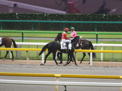 20140621 東京4R トマトリコピン 10
