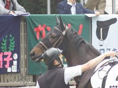 20190608 東京6R 3歳牝馬未勝利 ホウオウヒミコ 12