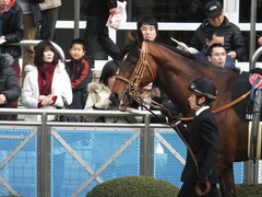 20150125 中山10R 若潮賞 モーリス 04