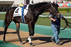 20191110 東京2R 2歳牝馬未勝利 ミヤコシャンティ 07