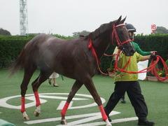 20180929 中山5R 2歳牝馬メイクデビュー オトナノジジョウ 29