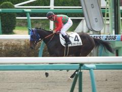 20180318 中山1R 3歳牝馬未勝利 ラプターゲイル 14