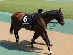 20160501 東京9R 陣馬特別(1000) オウケンブラック 04