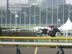 20141012 東京8R 東京HJ メジロサンノ12