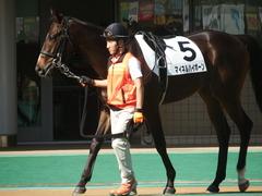 20181027 東京2R 2歳未勝利 マイネルハイボーン 02