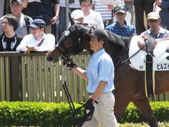 20170506 東京5R 3歳牝馬500万下 ビルズトレジャー 08