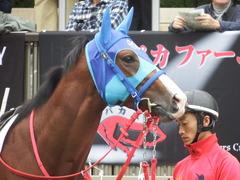 20181013 東京3R 2歳未勝利 アドマイヤスコール 15