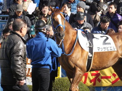 20141227 中山6R 2歳メイクデビュー マッサビエル 11
