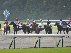 20141026 東京4R ラッシュアタック 16