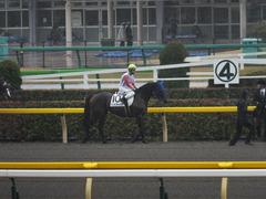 20141129 東京5R 2歳メイクデビュー タニオブキャップ 08