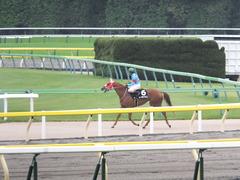 20151010 東京9R 山中湖特別 レーヌドブリエ 20