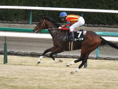 20150125 中山10R 若潮賞 モーリス 16