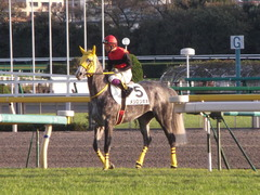 20121118 東京 1000万下のツボネちゃん 2