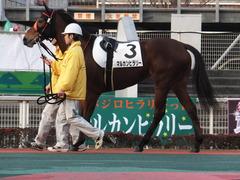 20151224 大井2R 2歳新馬 マルカンヒラリー 07