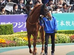 20161127 東京7R ベゴニア賞 クライムメジャー 10