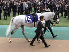 20151129 東京11R ジャパンカップ(G1) 07