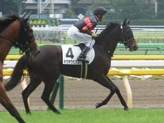 20190608 東京6R 3歳牝馬未勝利 ホウオウヒミコ 18