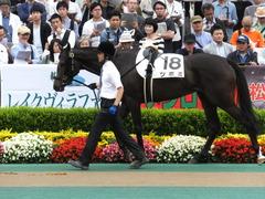 20160605 東京4R 3歳未勝利 ツボミ 10