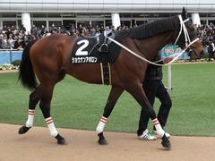 20150321 中山10R 韓国馬事会杯 ショウナンアポロン  06