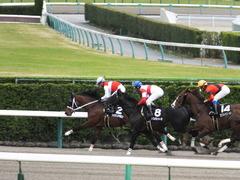 20150321 中山10R 韓国馬事会杯 ショウナンアポロン  14