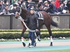 20150222 東京11R 金蹄S ショウナンアポロン 01