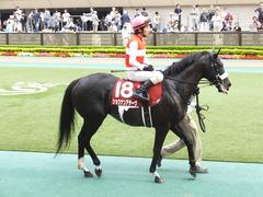 20150516 東京11R 京王杯SC(G2) ショウナンアチーヴ 12