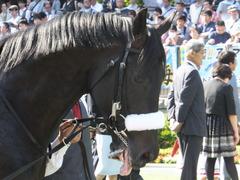 20140511 東京11R NHKマイルカップ(G1)ショウナンアチーヴ06