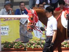 20160618 阪神8R 3歳上牝馬500万下 レーヌドブリエ 15
