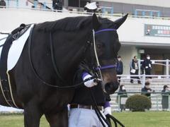 20170114 京都8R 4歳上牝馬500万下 サラマンカ 06