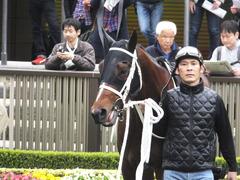 20141108 東京9R ショウナンアポロン 09