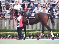 20171104 東京9R 南武特別(1000) ホウオウドリーム 10