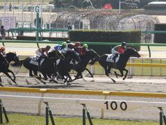 20150221 東京2R 3歳未勝利 コスモポッポ 09