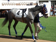 20180304 中山5R 3歳牝馬未勝利 プラチナベール 03