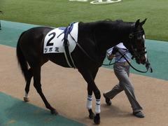 20160514 東京5R 3歳牝馬未勝利 ツボミ 06