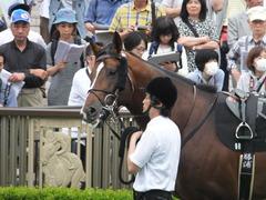 20160528 東京9R 富嶽賞(1000) プエルト 12