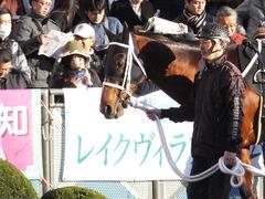 20161224 中山11R 師走S(OP) ショウナンアポロン 05